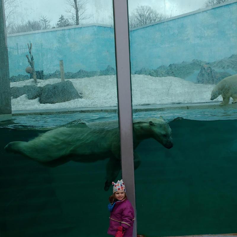 C'est pas mal gros un ours polaire!