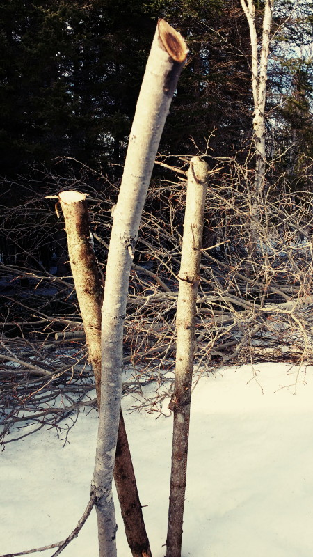 Les branches debout