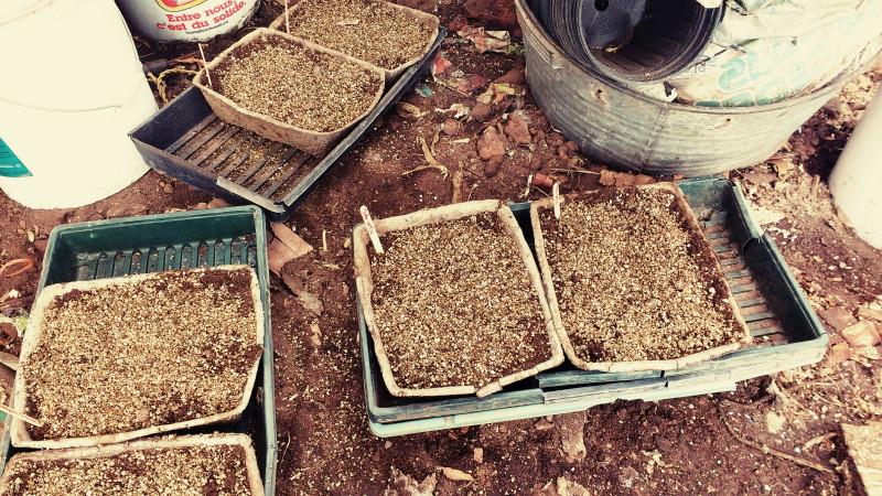 Le temps des semis de tomate et de basilic.