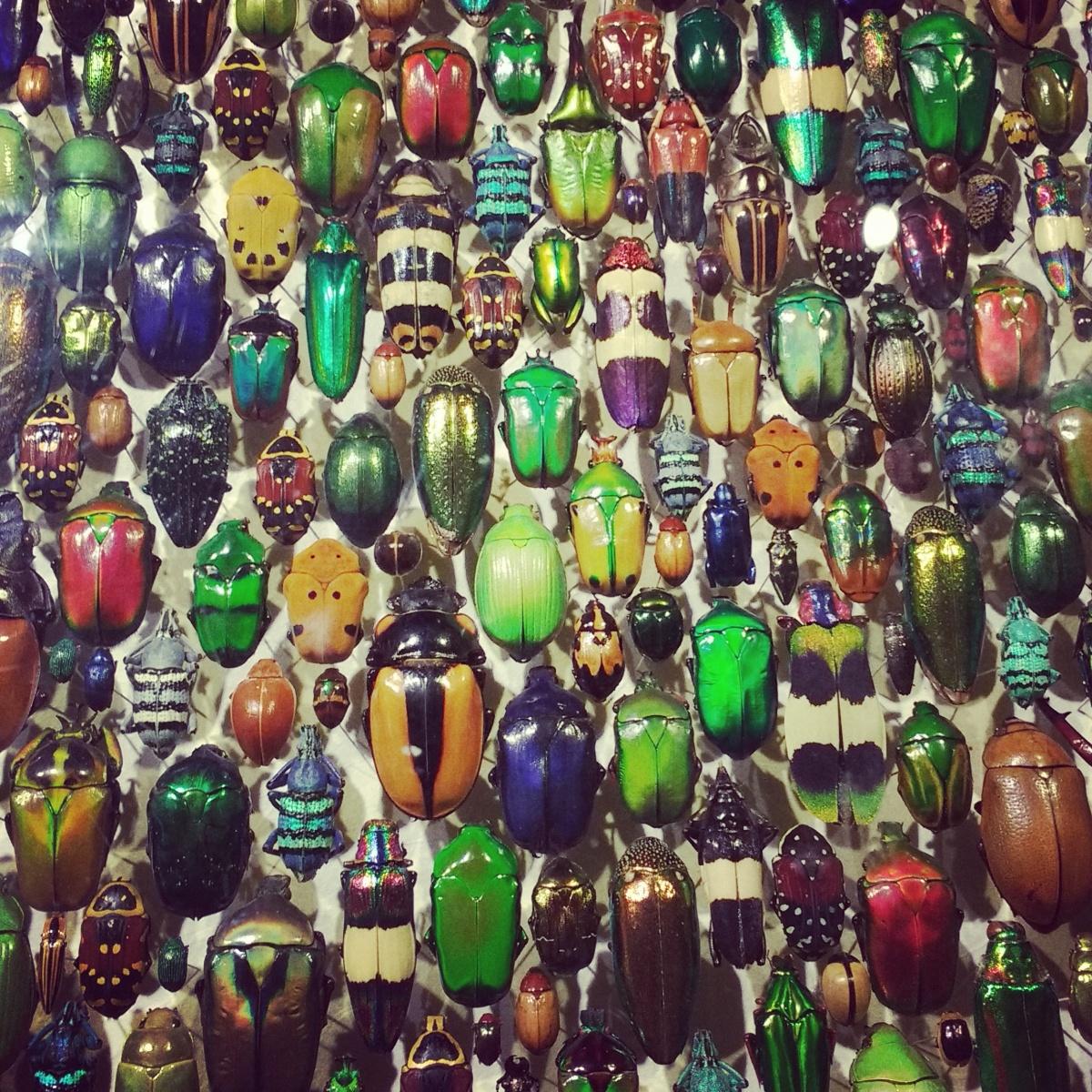 Mosaïque de scarabées de l'Insectarium de Montréal