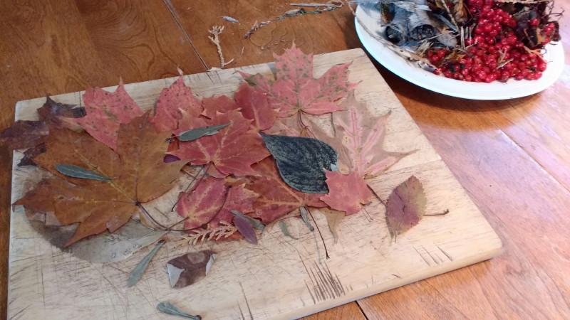 Semaine 3 - Accueillir l'automne
