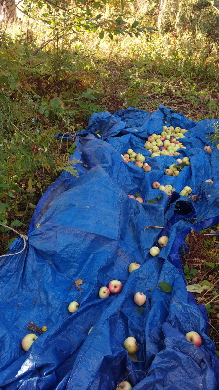 Apprentissage naturel: La pomme
