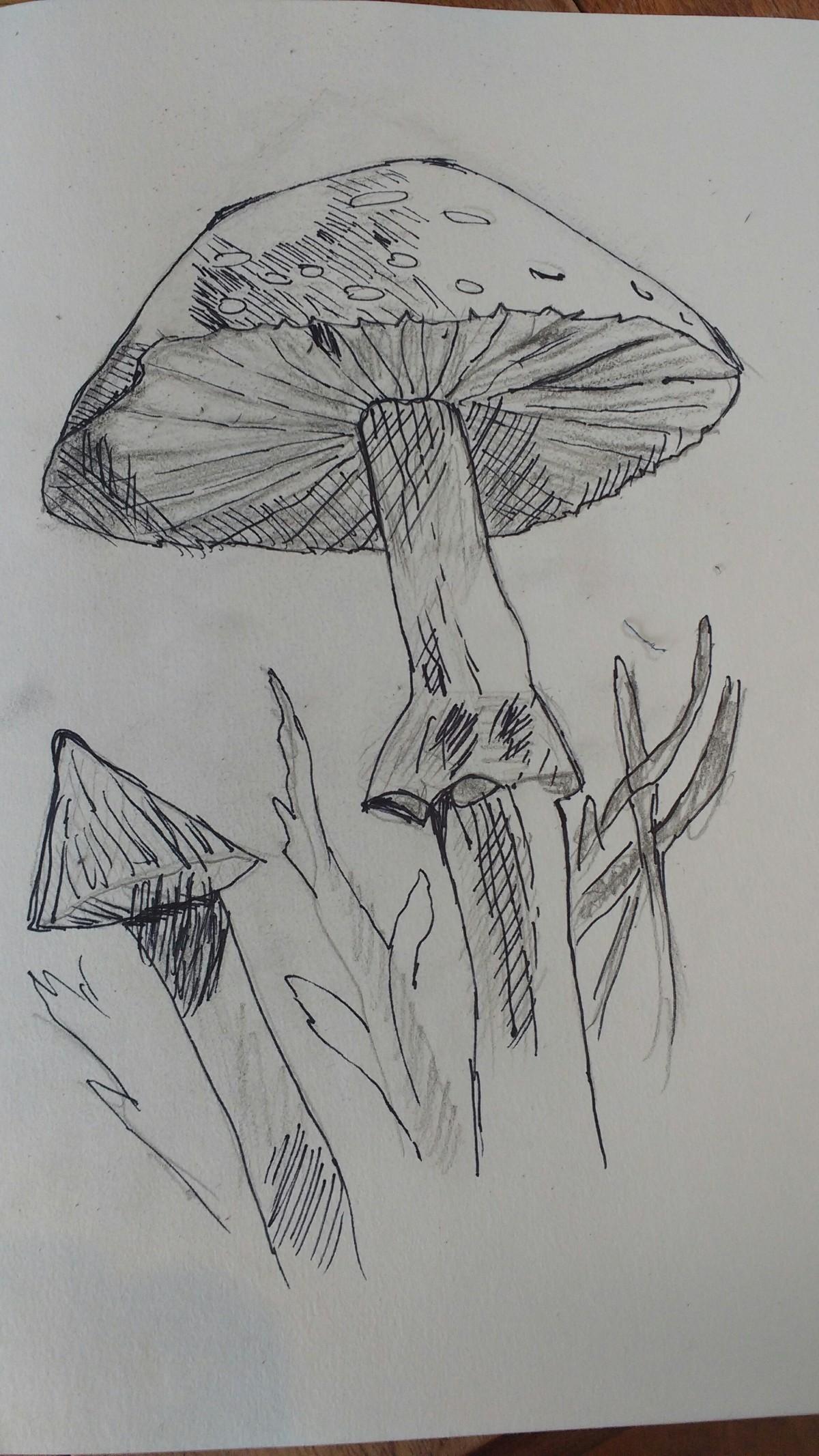 Observons les champignons